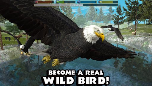 ultimate-bird-simulator-android-apk-download-droidapk-org-4